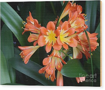 Colorful Beauties Wood Print by Donna Parlow