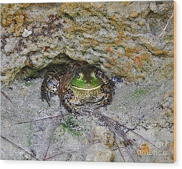 Wood Print featuring the photograph Colorful Camo by Al Powell Photography USA