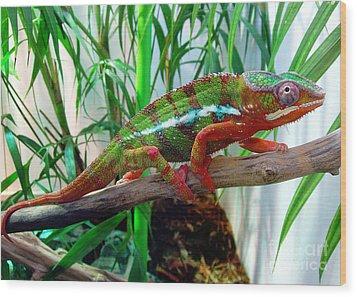 Colorful Chameleon Wood Print by Nancy Mueller