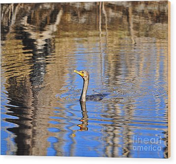 Wood Print featuring the photograph Colorful Cormorant by Al Powell Photography USA