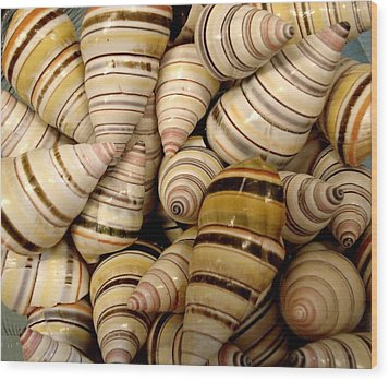 Colorful Cream And Tan Shells Wood Print by Rosalie Scanlon