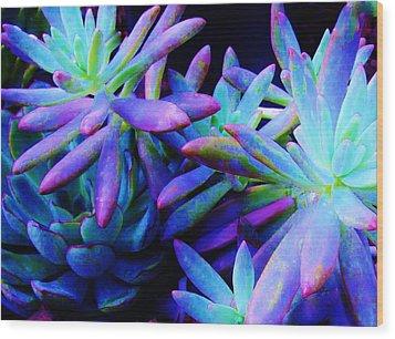 Colorful Dancing Succulents Wood Print