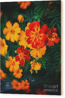 Wood Print featuring the photograph Colorful Flowers by Silvia Ganora
