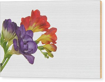 Colorful Freesias Wood Print