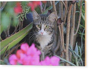 Colorful Kitty Wood Print