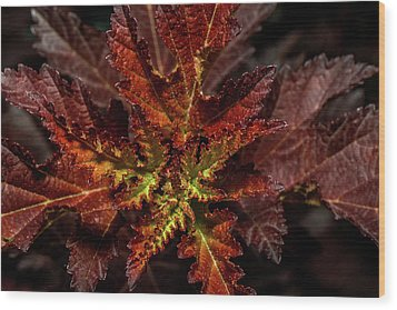 Wood Print featuring the photograph Colorful Leaves by Paul Freidlund
