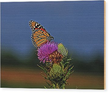 Wood Print featuring the photograph Colorful Monarch by Sandy Keeton