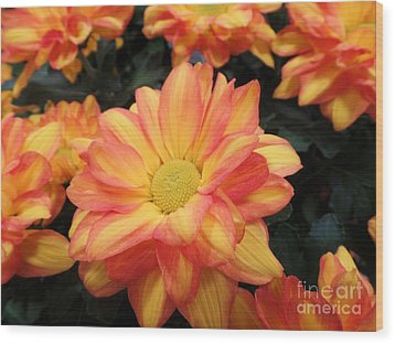 Wood Print featuring the photograph Colorful Mums by Ray Shrewsberry