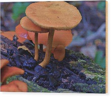 Colorful Mushrooms Wood Print by Robert Ulmer