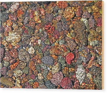 Colorful Rocks In Stream Bed Montana Wood Print by Jennie Marie Schell