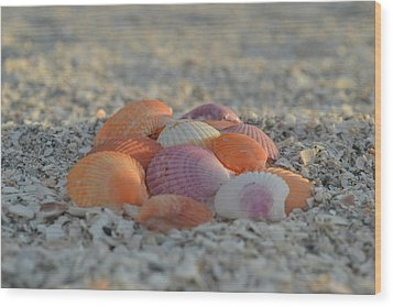 Wood Print featuring the photograph Colorful Scallop Shells by Melanie Moraga