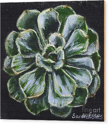 Colorful Succulent Wood Print by Sandra Estes