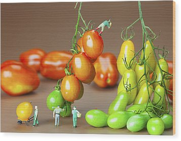Wood Print featuring the photograph Colorful Tomato Harvest Little People On Food by Paul Ge