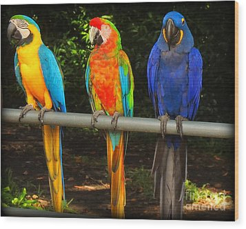 Colorful Trio Wood Print