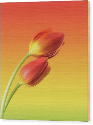 Colorful Tulips Wood Print by Wim Lanclus