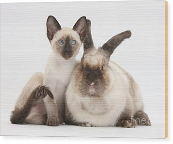 Colorpoint Rabbit And Siamese Kitten Wood Print by Mark Taylor