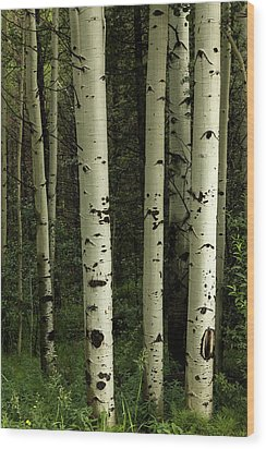 Wood Print featuring the photograph Colors And Texture Of A Forest Portrait by James BO Insogna