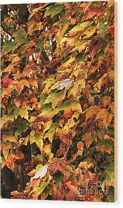 Colors Of Autumn Wood Print by John Rizzuto