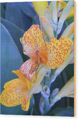 Colors Of The Canna Lily Wood Print by Warren Thompson