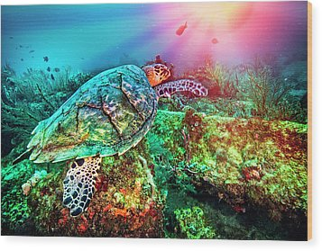 Wood Print featuring the photograph Colors Of The Sea In Lights by Debra and Dave Vanderlaan
