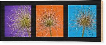 Colourful Crocus Triptych Wood Print by Lisa Knechtel