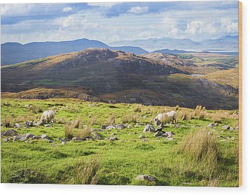 Colourful Undulating Irish Landscape In Kerry With Grazing Sheep Wood Print by Semmick Photo