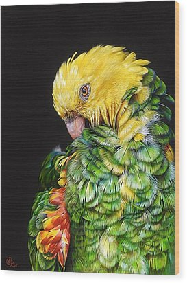 Wood Print featuring the drawing Colours Of The Jungle - Yellow-headed Amazon by Elena Kolotusha