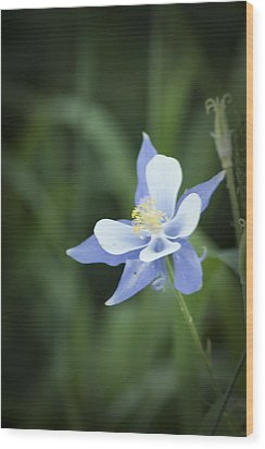 Wood Print featuring the photograph Columbine by Daniel Hebard