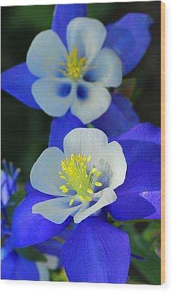 Columbine Day Wood Print