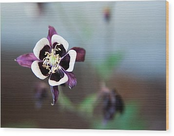 Wood Print featuring the photograph Columbine by Erin Kohlenberg