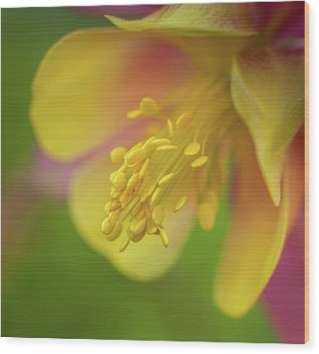 Wood Print featuring the photograph Columbine by Greg Nyquist