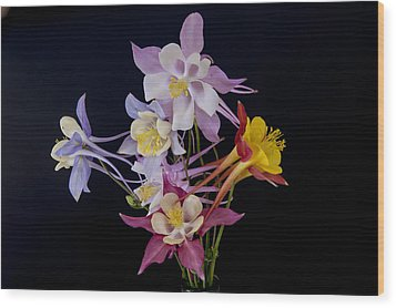 Wood Print featuring the photograph Columbine Medley by Gary Lengyel