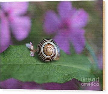 Come Out Of Your Shell Wood Print by Susan Dimitrakopoulos