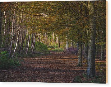 Wood Print featuring the photograph Comfort In These Woods by Odd Jeppesen