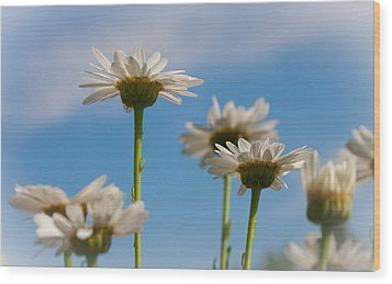 Coming Up Daisies Wood Print