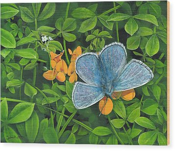 Common Blue On Bird's-foot Trefoil Wood Print