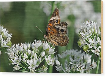 Common Buckeye Butterfly Wood Print