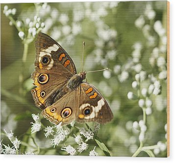 Common Buckeye Butterfly On White Thoroughwort Wildflowers Wood Print by Kathy Clark