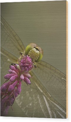 Common Darter Dragonfly Wood Print by Andy Astbury