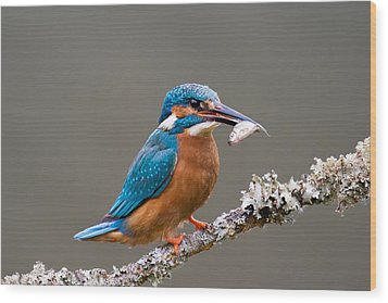 Wood Print featuring the photograph Common Kingfisher 1 by Phil Stone
