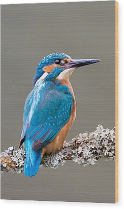 Wood Print featuring the photograph Common Kingfisher 2 by Phil Stone