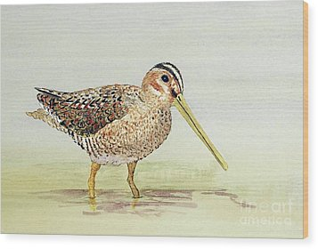 Common Snipe Wading Wood Print
