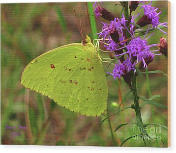 Wood Print featuring the photograph Common Sulphur Butterfly by Donna Brown