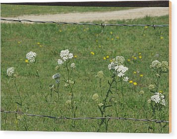 Common Yarrow Wood Print by Robyn Stacey
