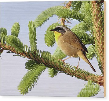 Common Yellow-throat Wood Print by Debbie Stahre