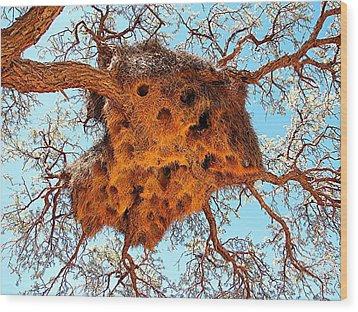 Community Weaver's Nest Wood Print