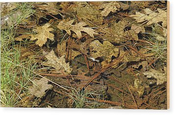 Composition In Brown And Green With Butterfly Wood Print by Larry Darnell
