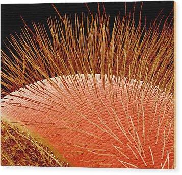 Compound Eye Of A Bee, Sem Wood Print by Susumu Nishinaga