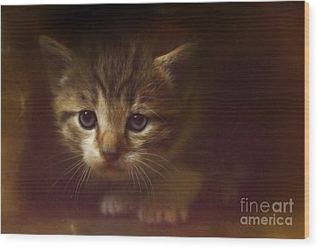 Concentration Wood Print by Kathy Russell