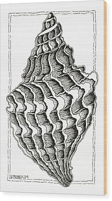 Conch Shell 2 Wood Print